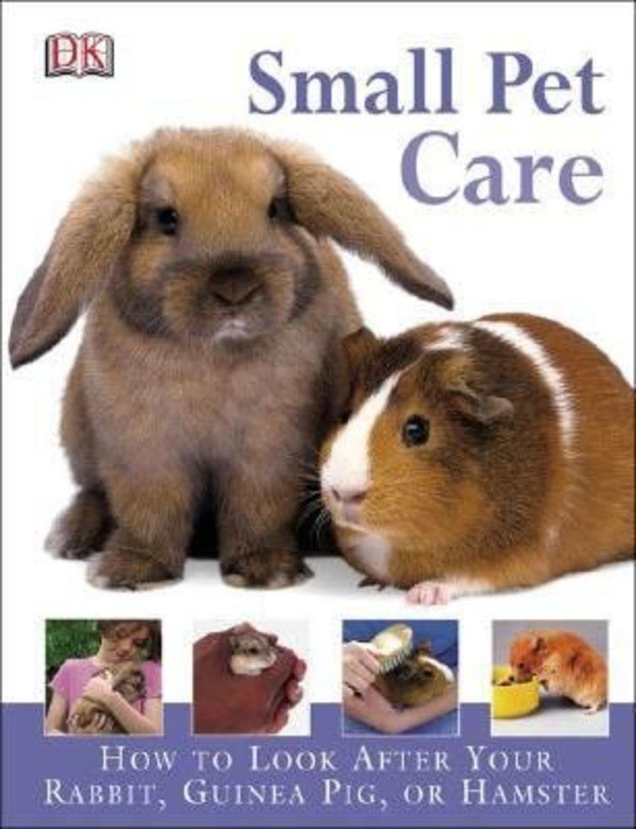 Should I Get A Guinea Pig or A Bunny Rabbit?