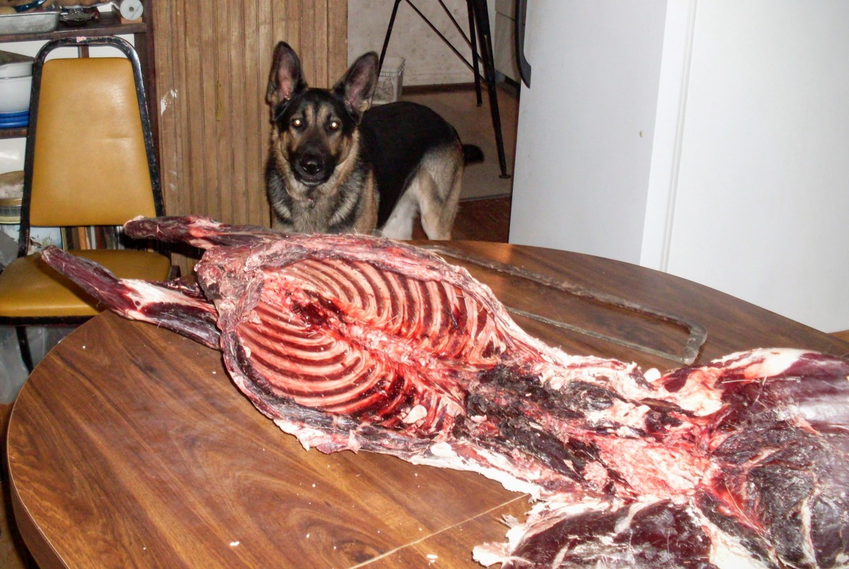 How to Cut up a Deer for You and Your Dog: An Illustrated Guide