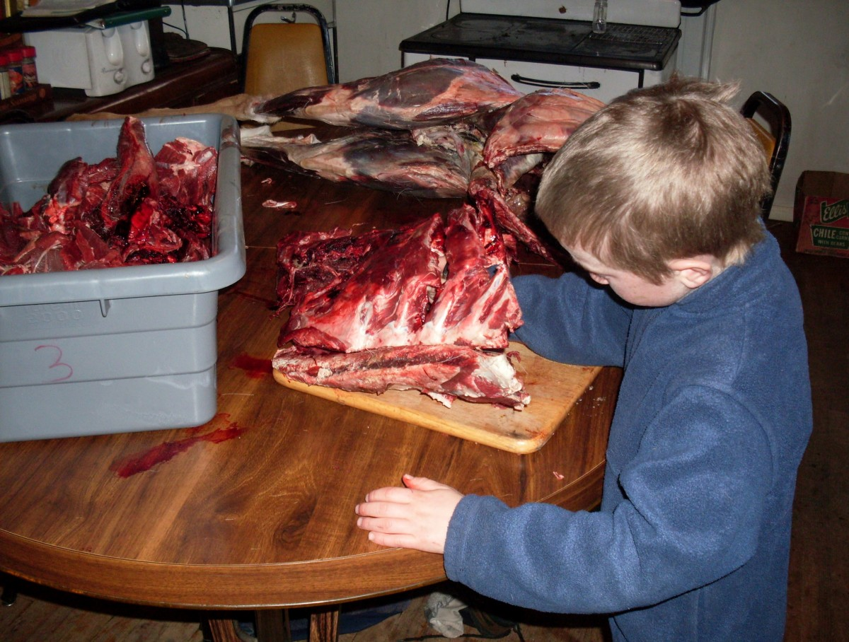 This rib section, with my son Billy cutting bits out from between the bones, is for hamburger - the blue tub is full of similar bits for ground deer meat.