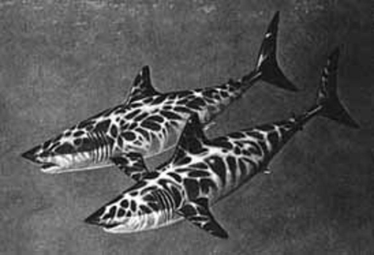 The Endangered Shortfin Mako Shark