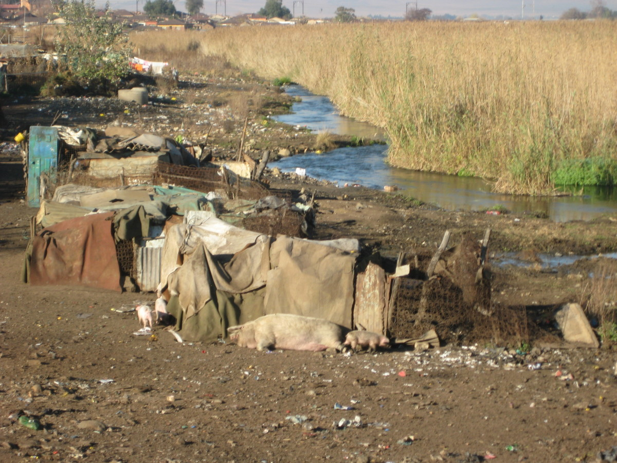 Across a small river that runs behind the Kliptown squatter camp southwest of Johannesburg, a pack of swine has managed to carve out a comfortable existence surrounded by mounds of garbage -- both a familiar sight and smell in the 45,000-person slum.