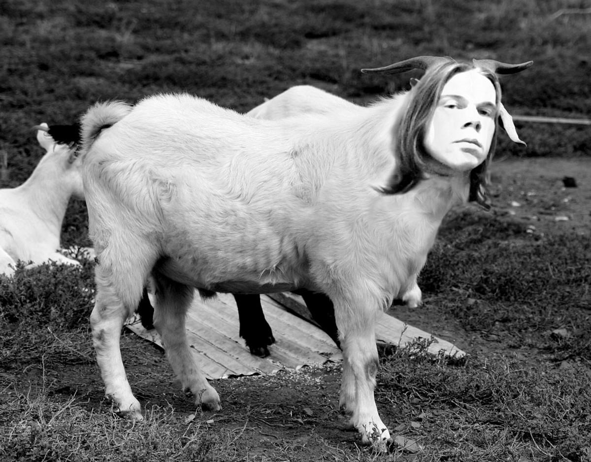 """""""Hey nanny-goats! It's my mating season. Baa!"""""""