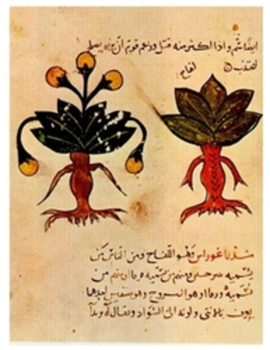Description of Herbs in an Arabic Herbal
