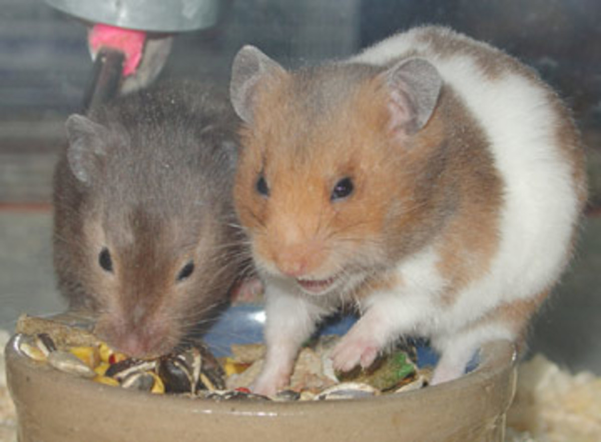 You will find that Hamsters are very inquisitive.