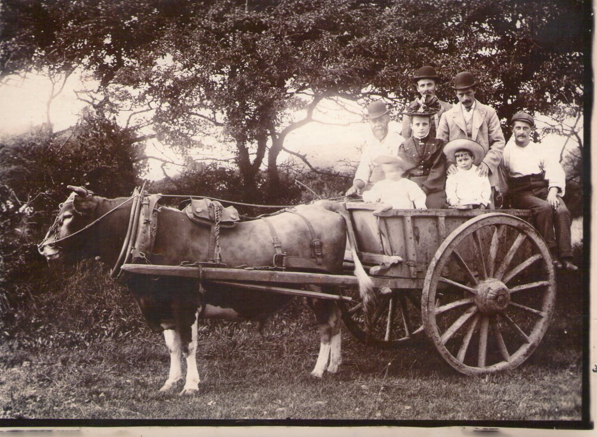 Original Old Guernsey Farming Pictures and Photos.