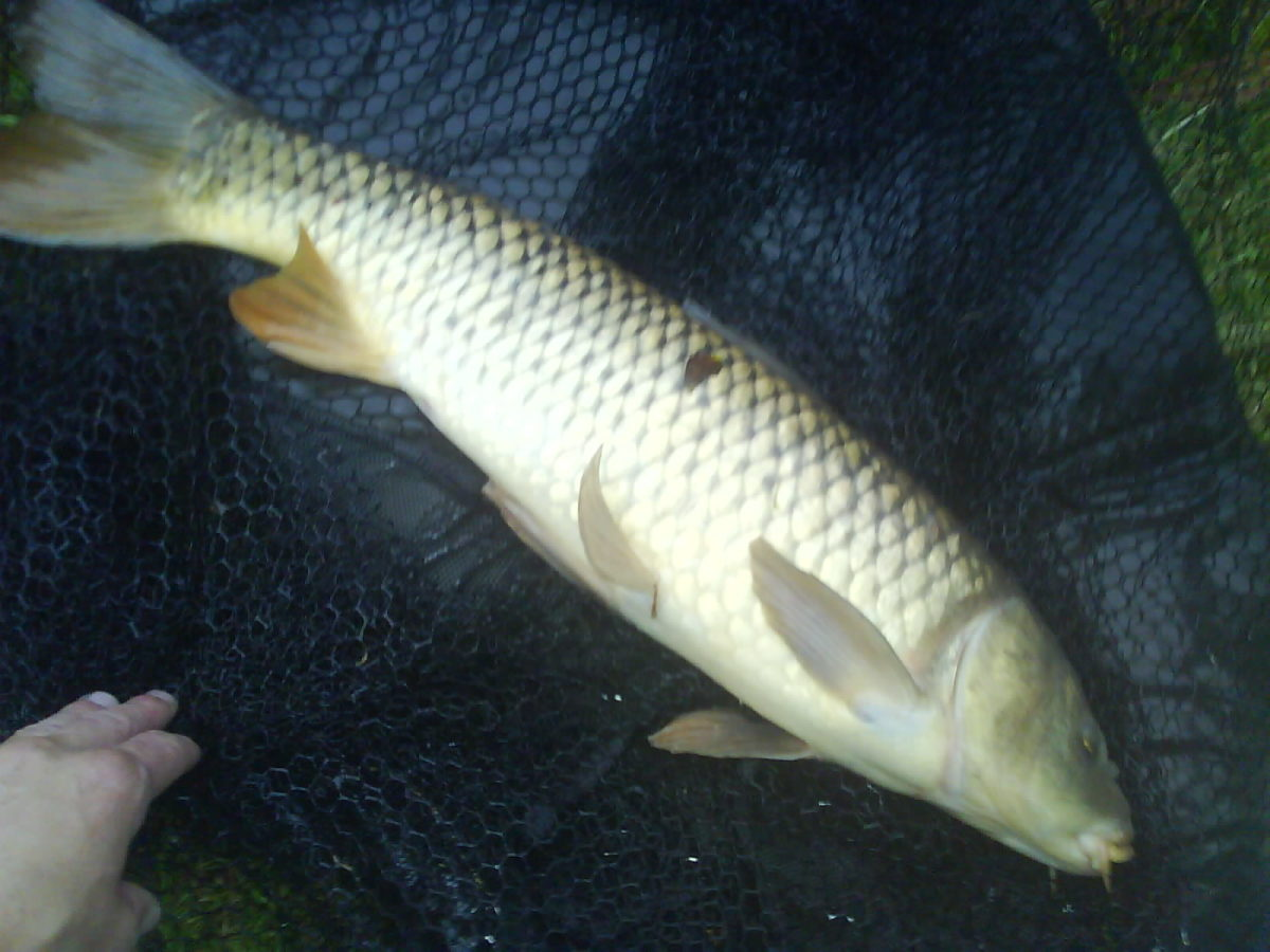 Unusual Carp Fishing Baits - Proven Methods | Ideas | Free Recipes