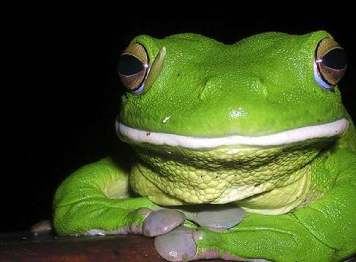 Frogs  very often hermaphrodites
