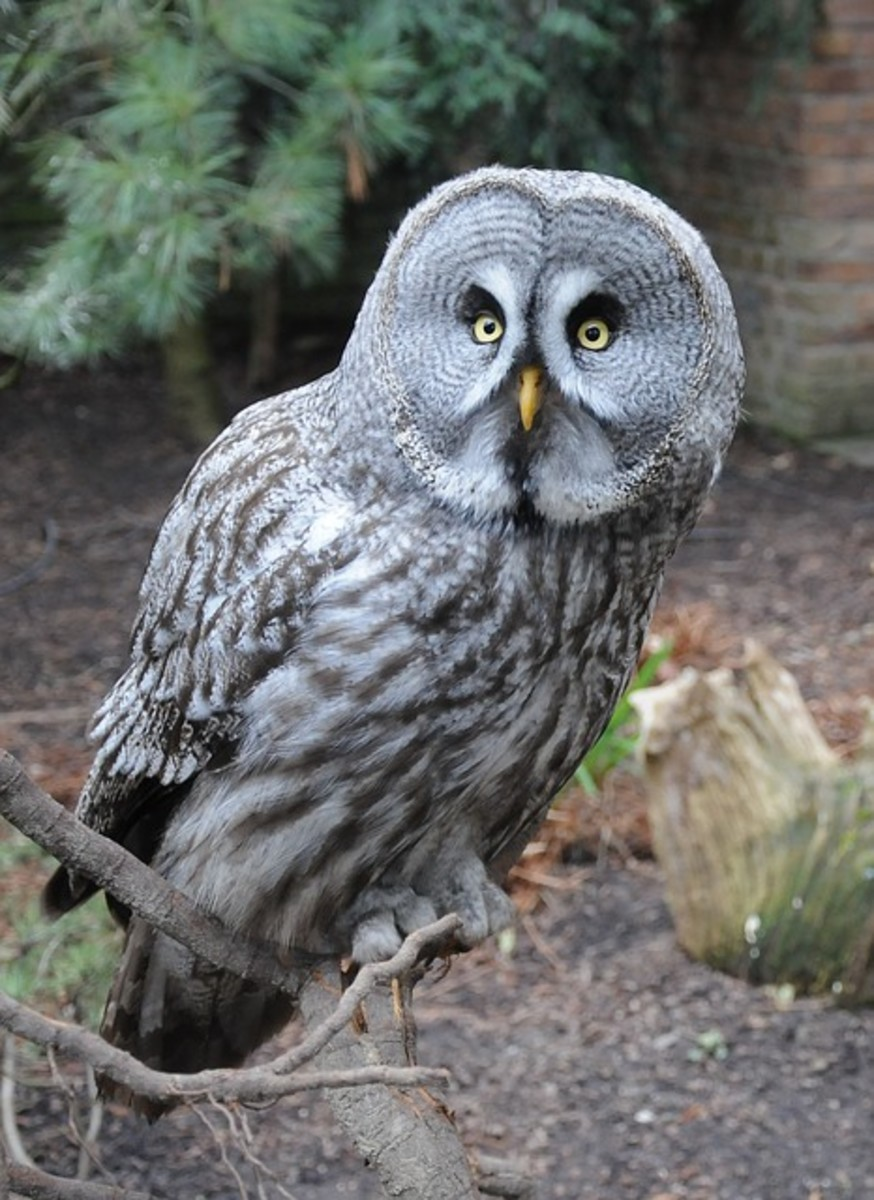 Don't let silent acid reflux turn you into a night owl.