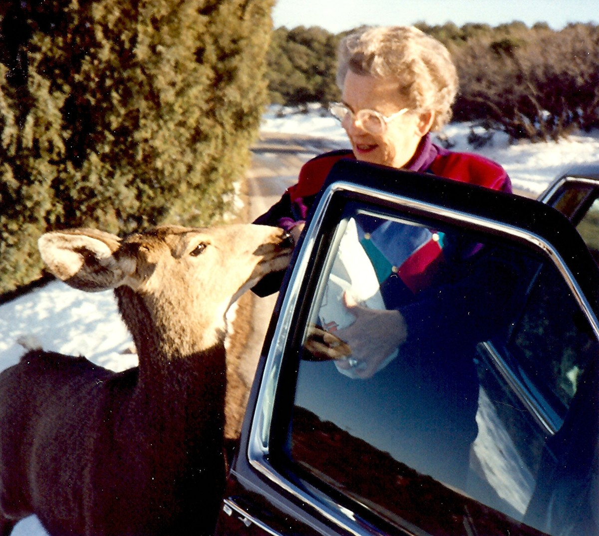 My mother hand feeding a deer
