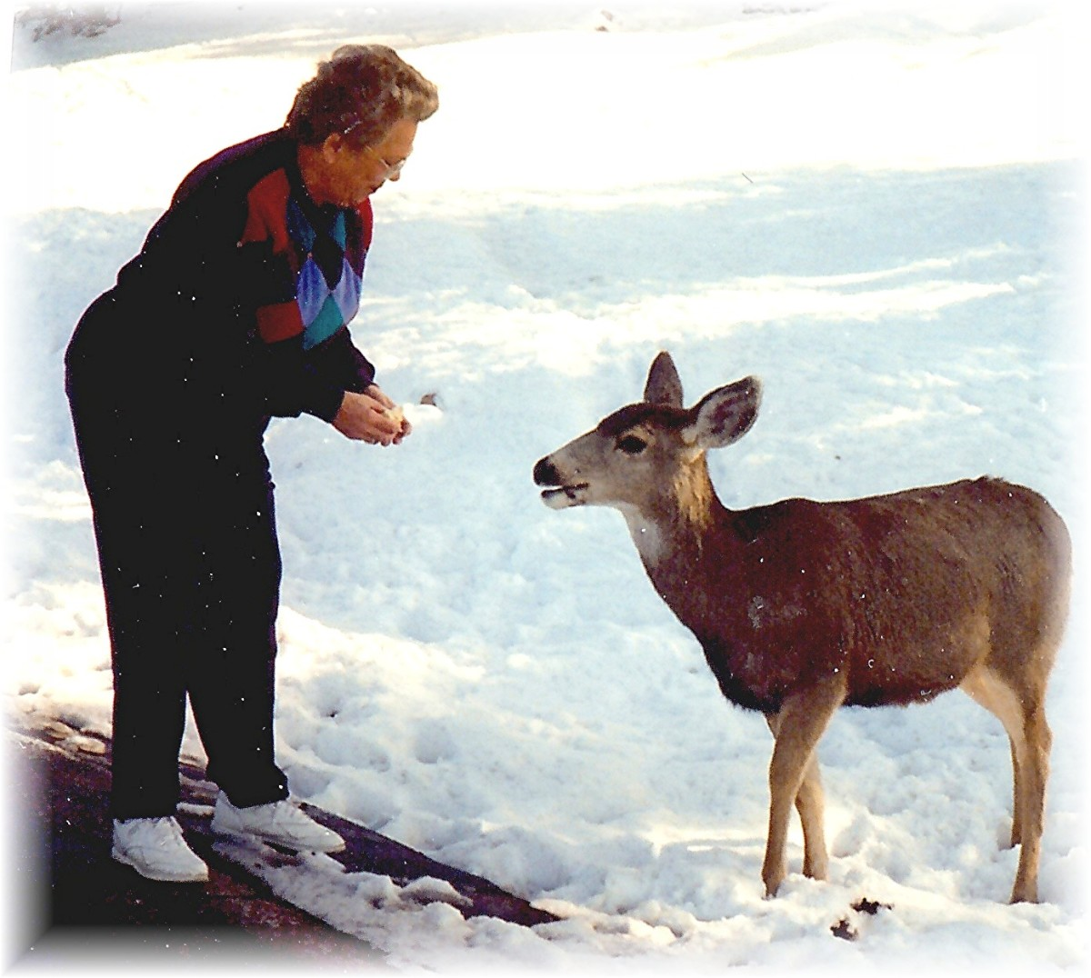 Photo of my mother and a deer
