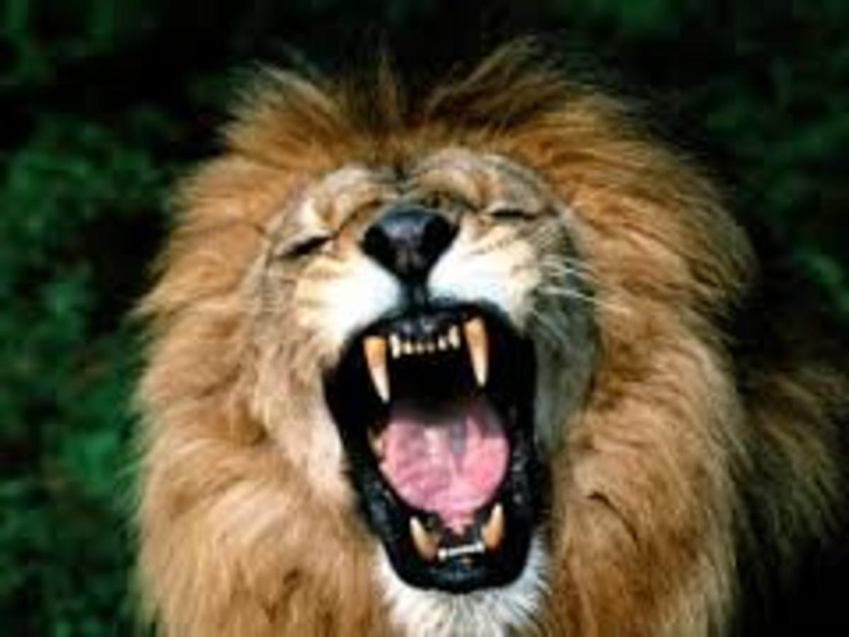 Let us go to court. I am ready to roar!