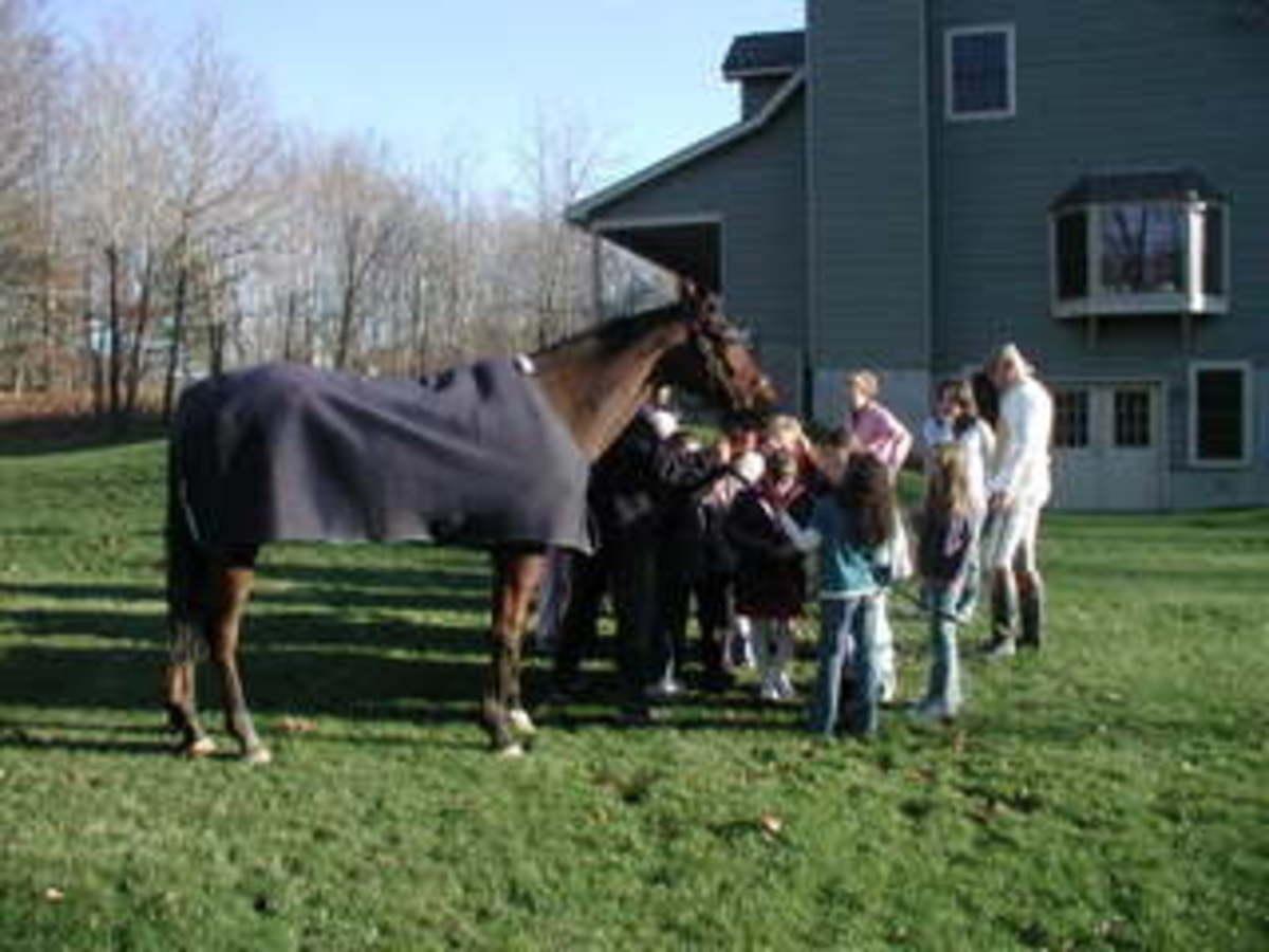 horseparty