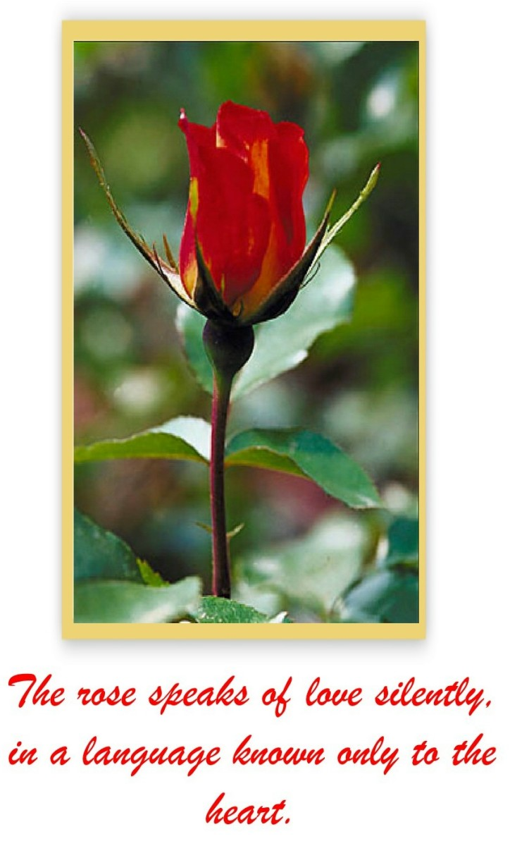 quotations-about-roses