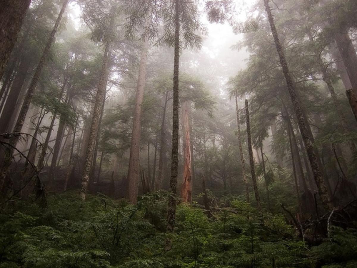 A rain forest