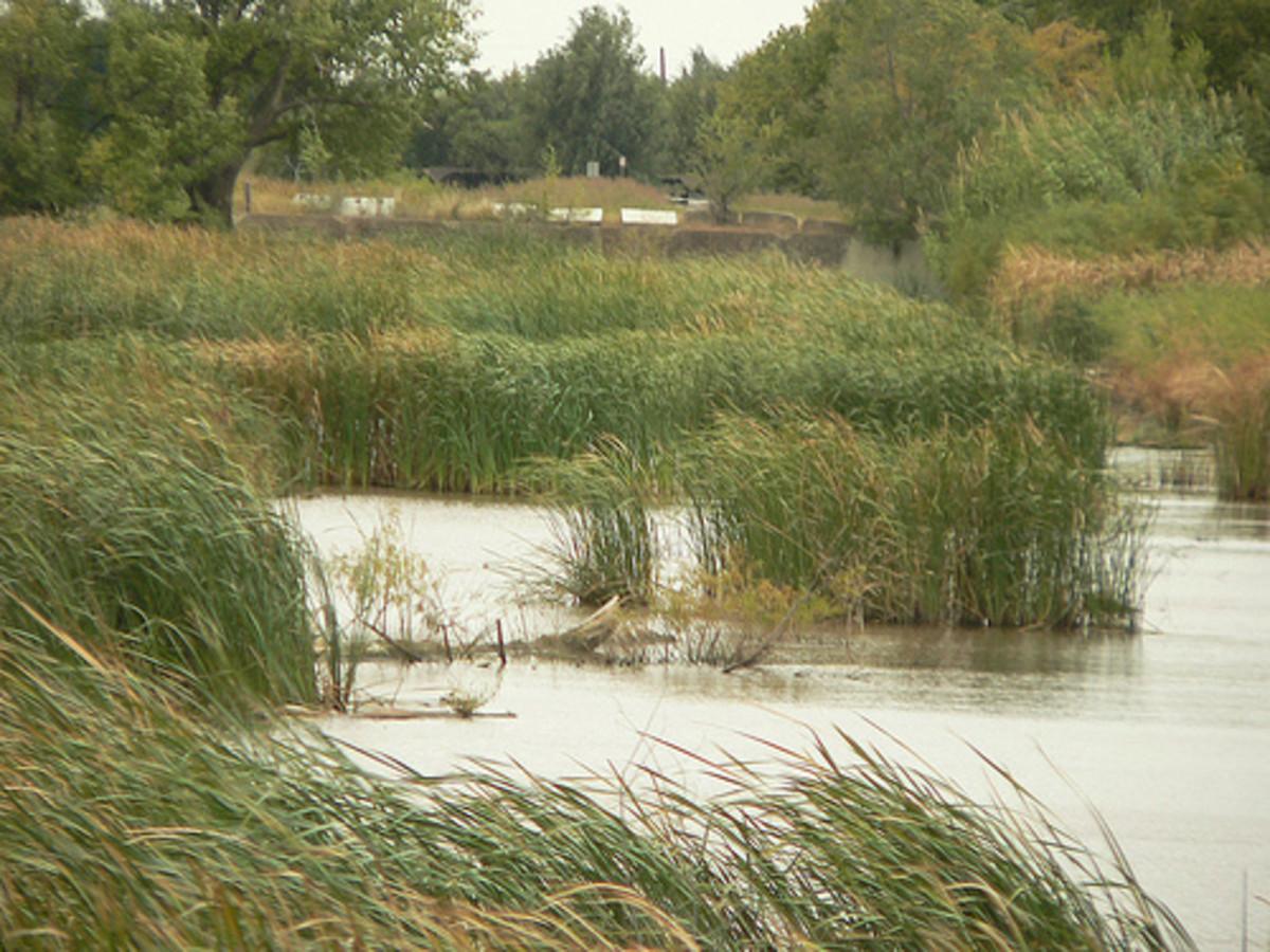 A marsh area
