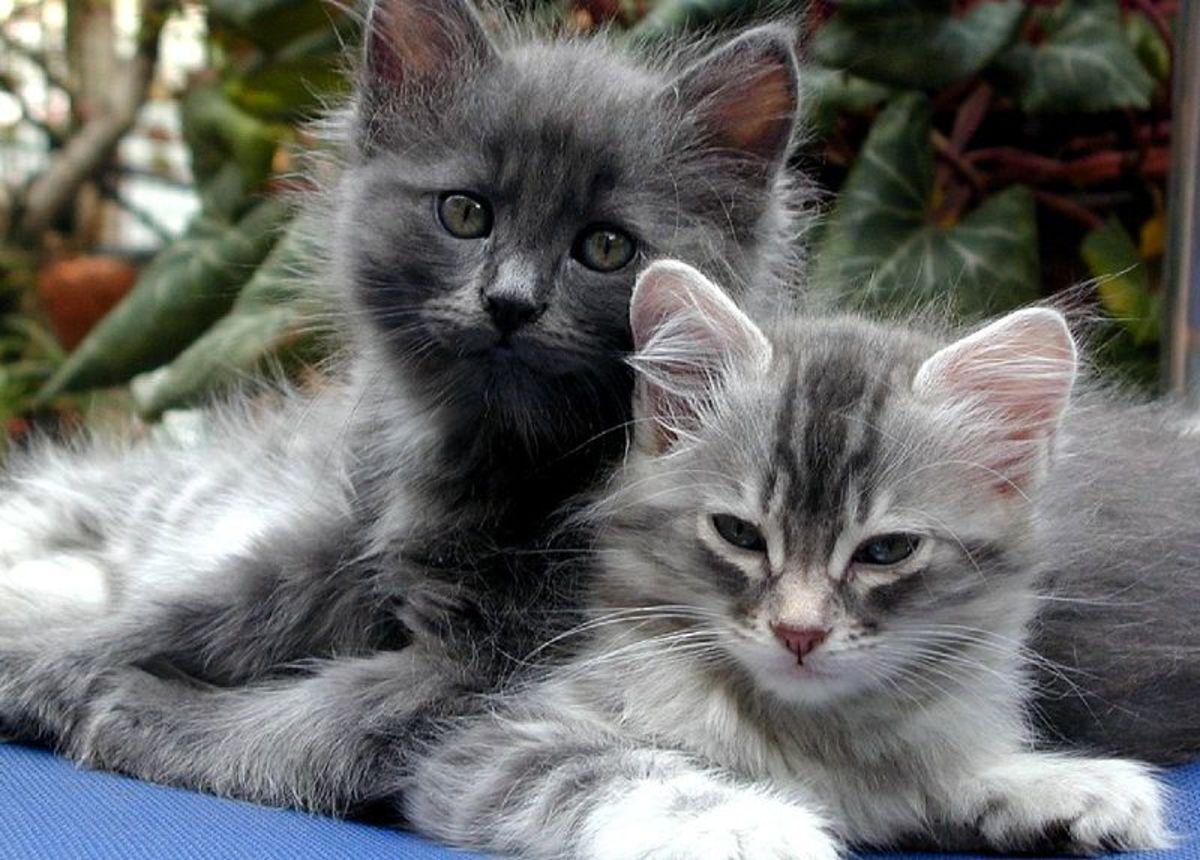 Cats Petunia and Mimosa