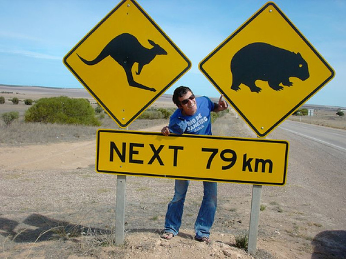 Not a joke: roos and wombats Photo: Alessiozz via flickr