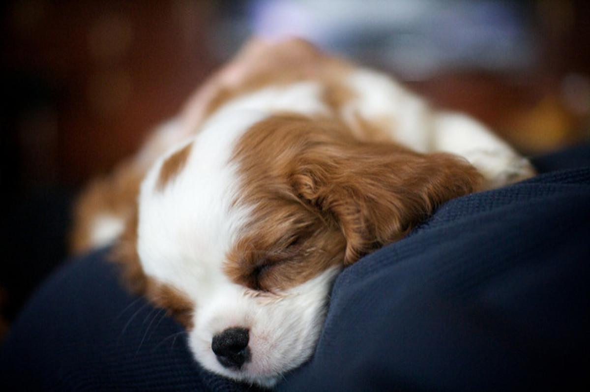 cutest-puppies-2
