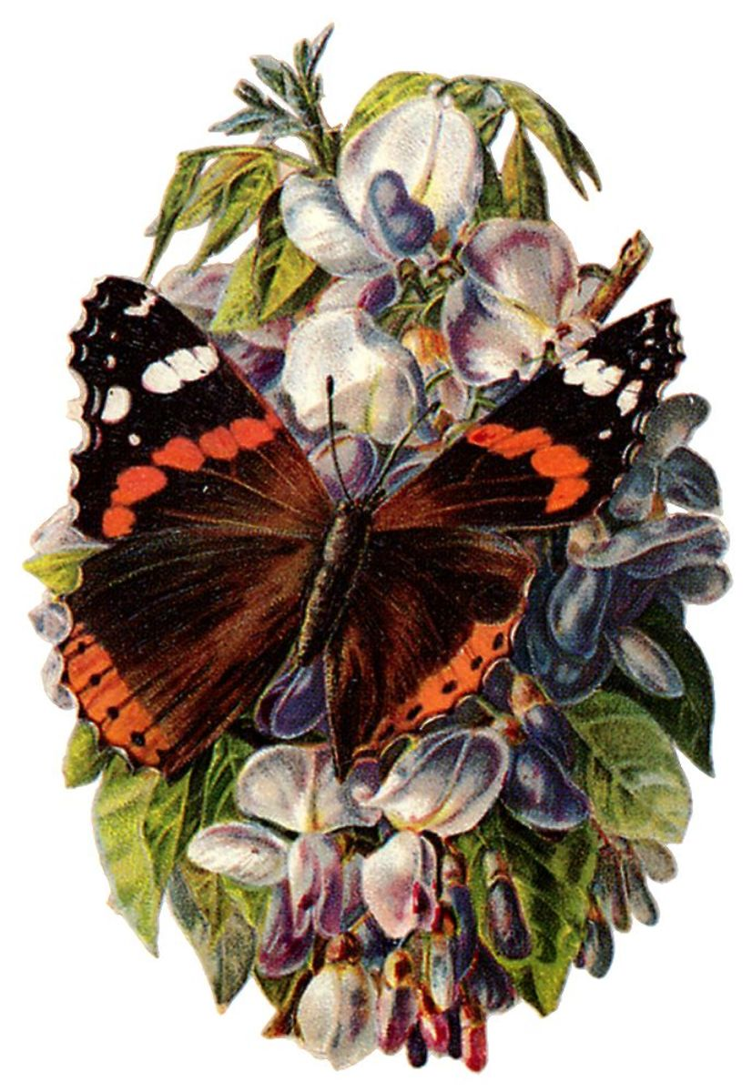 Butterfly pictures: Black, brown and orange butterfly on flowers