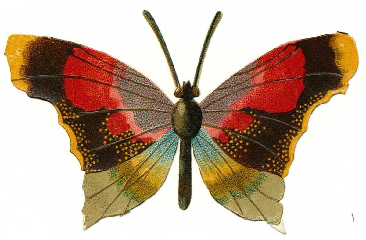 Please scroll down to see the free vintage butterfly pictures