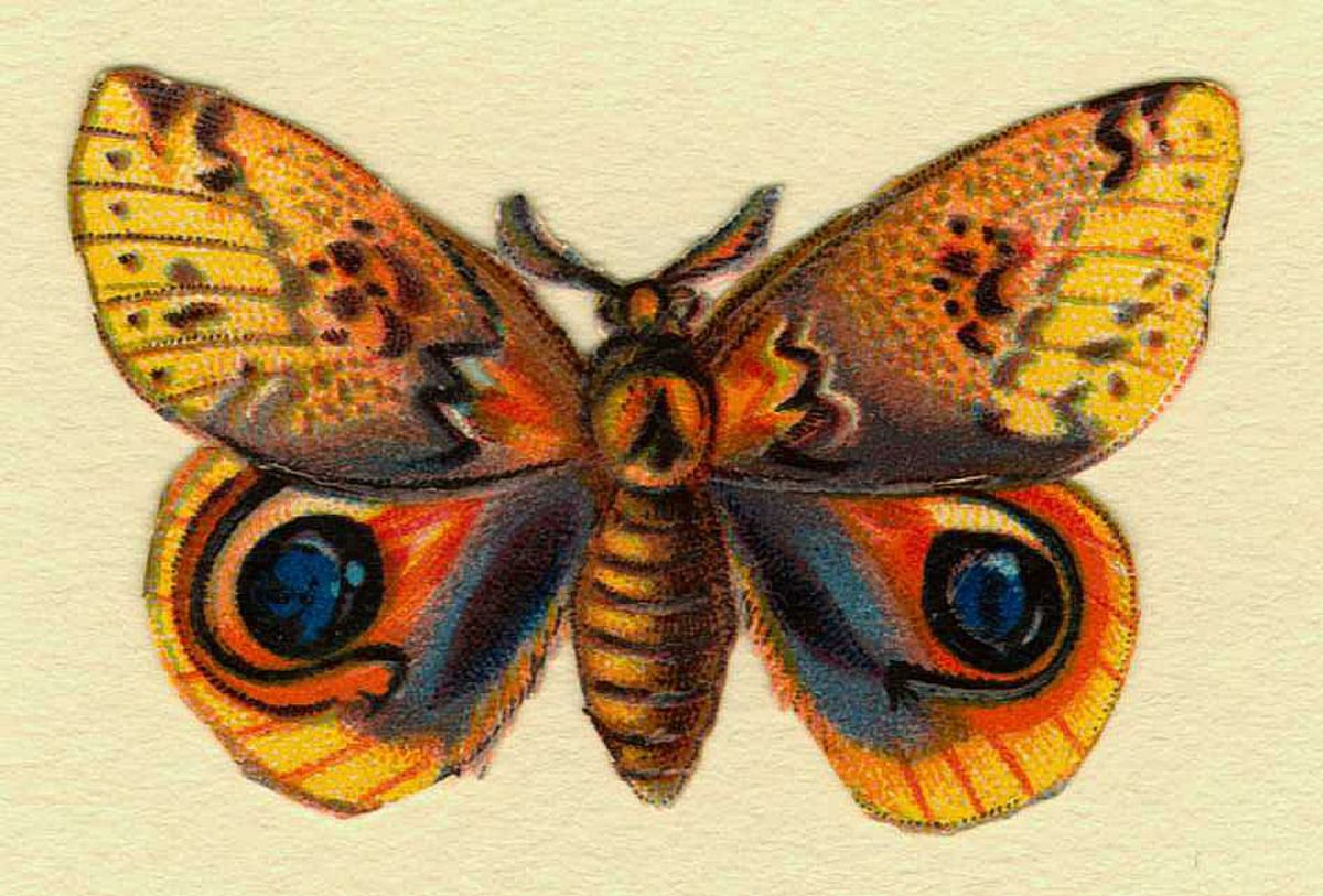 Brown, yellow, orange and rust butterfly picture