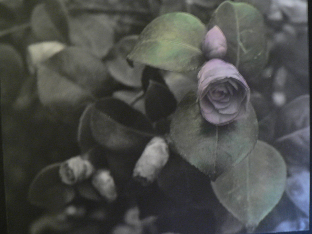 One flower and the surrounding leaves were colored, leaving the background in black and white.