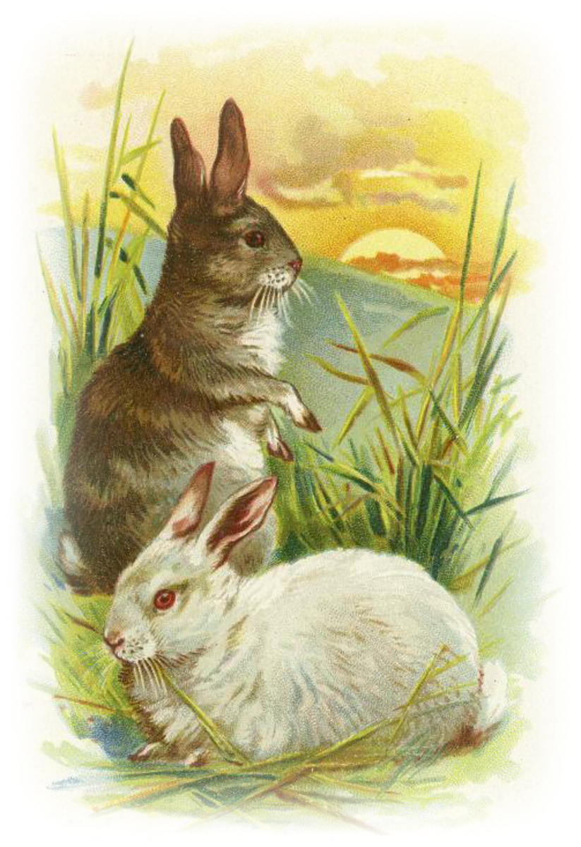 Free vintage Easter clipart images: two bunny rabbits