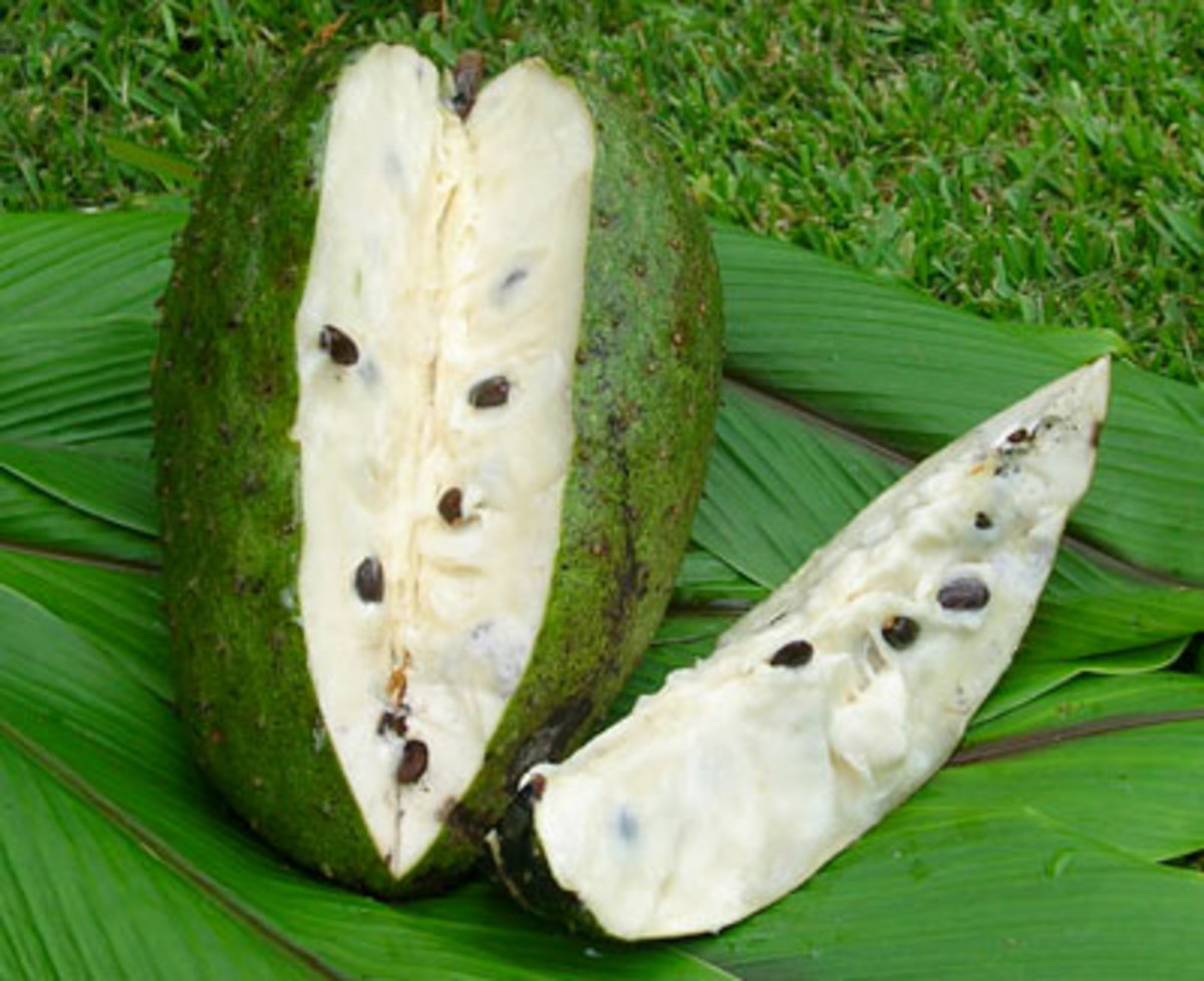 Guanabana - one of my favorite juiced fruits, also known as the soursop