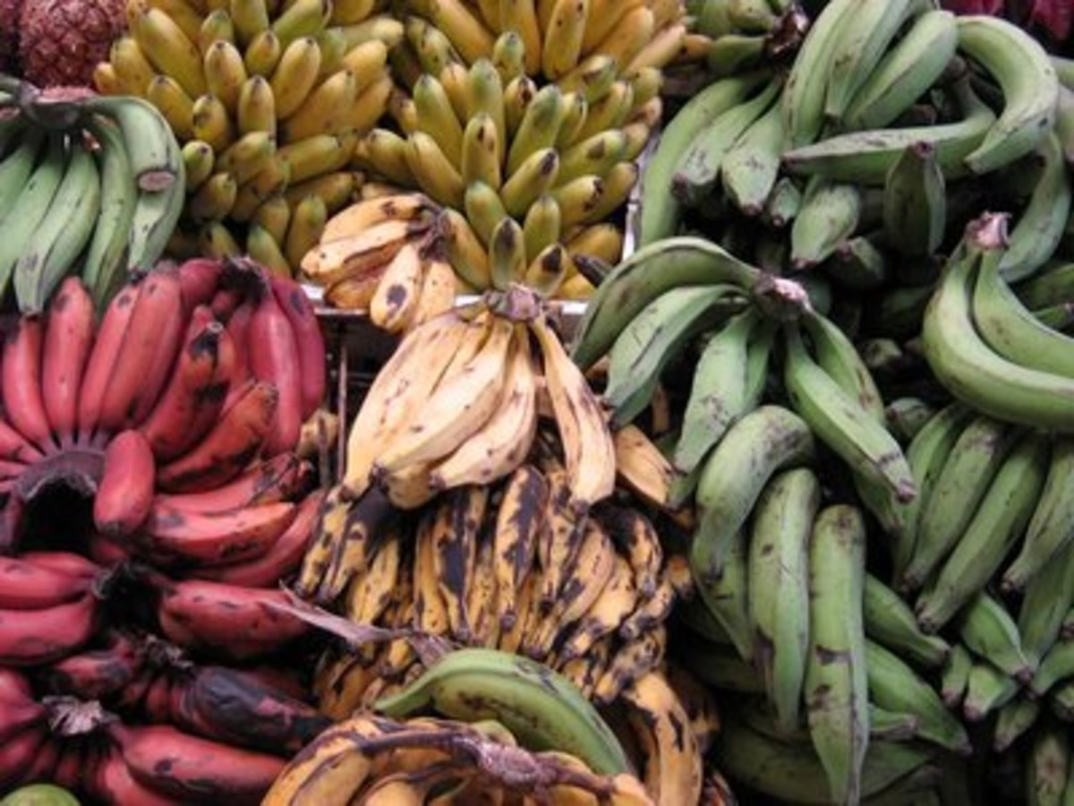 Bananas and Plantain from the Coastal region