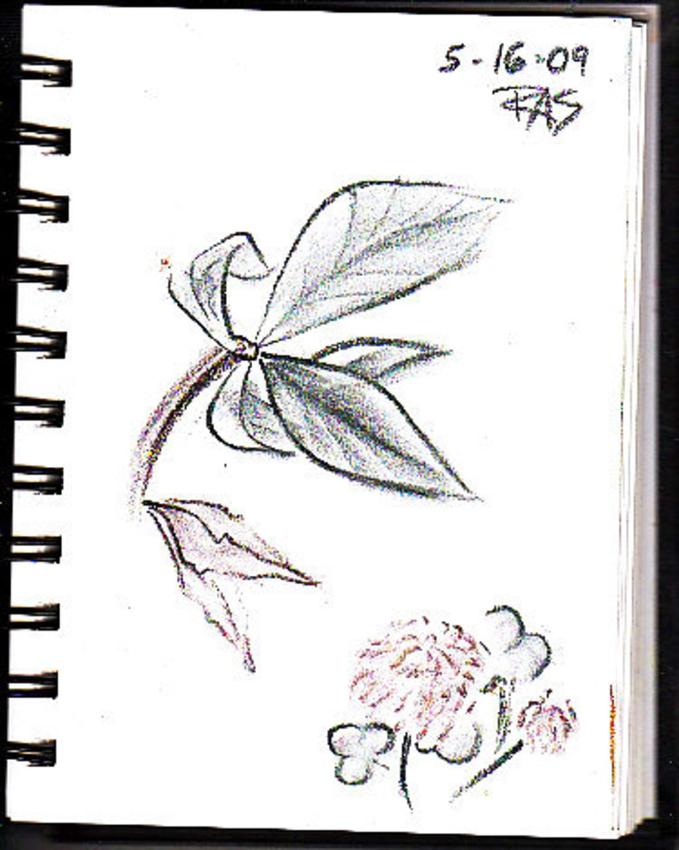 Leaves and Clover page from ProArt wirebound sketchbook, by Robert A. Sloan, in Derwent Tinted Charcoal Pencils.