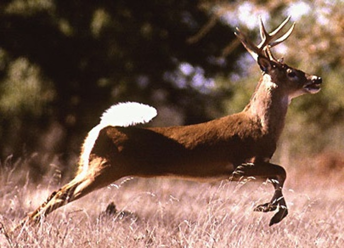 The Dangers of Deer Hunting -- Major Risks in Hunter's Safety