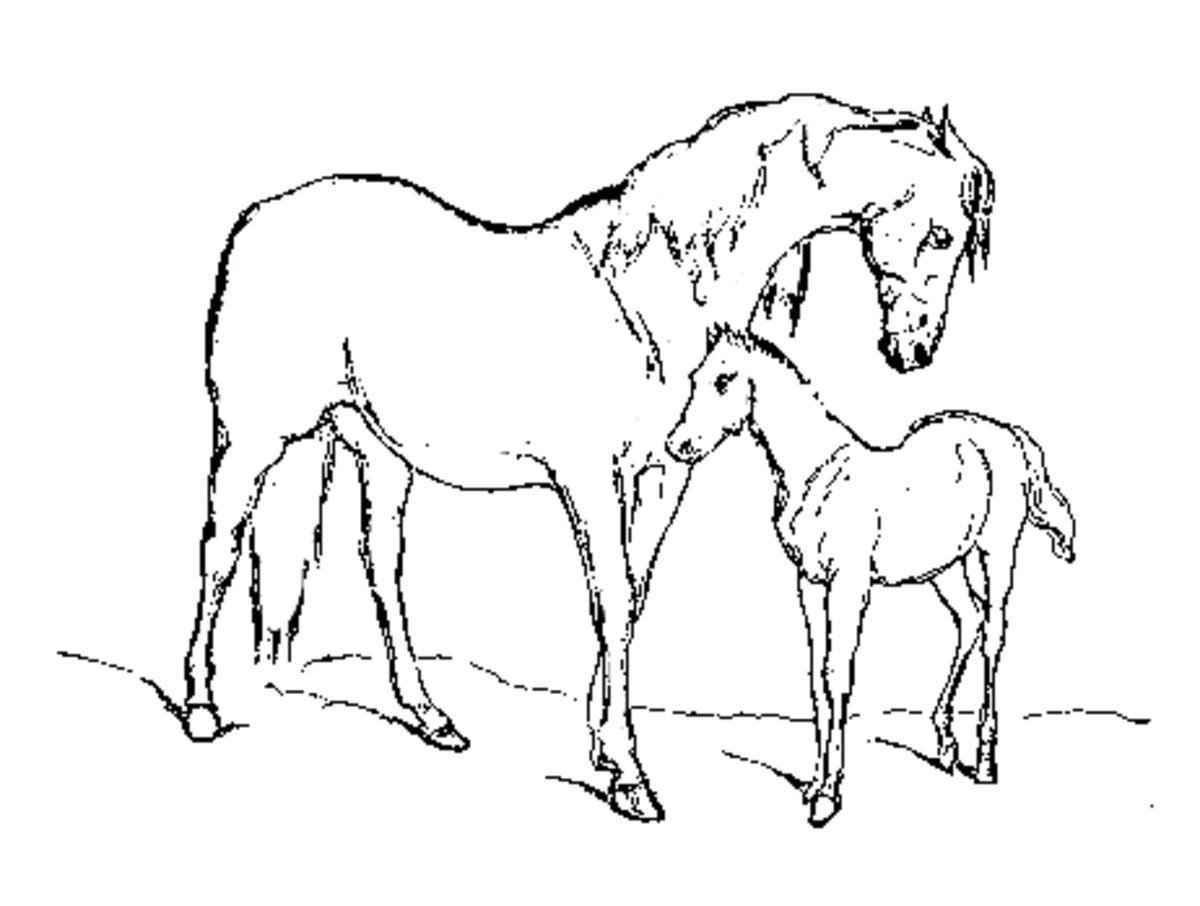 horsecoloringpages