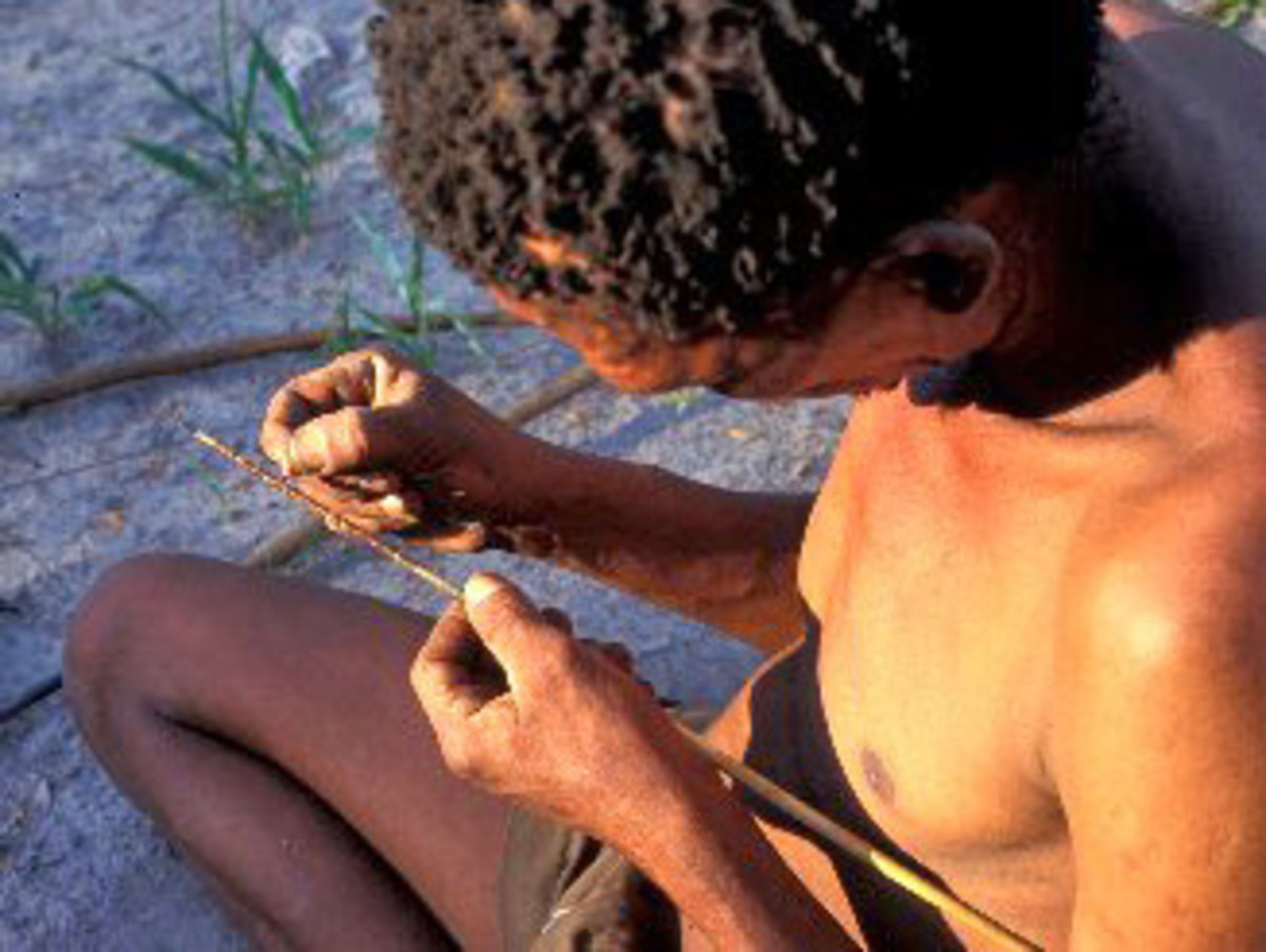 San Hunter Gatherers of kalahari - uses larvae and pupae of diamphidia beetle to poison their arrows