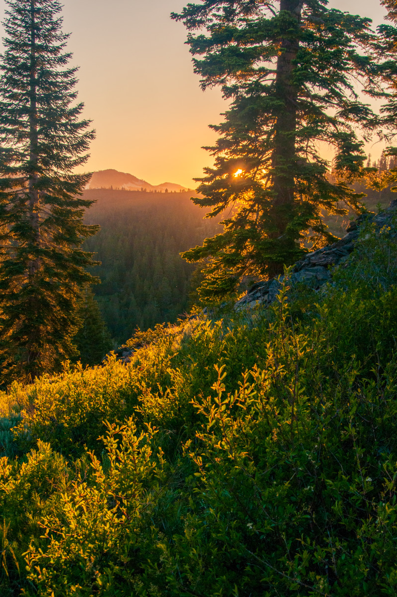 Thick Evergreen forests of the Sierras