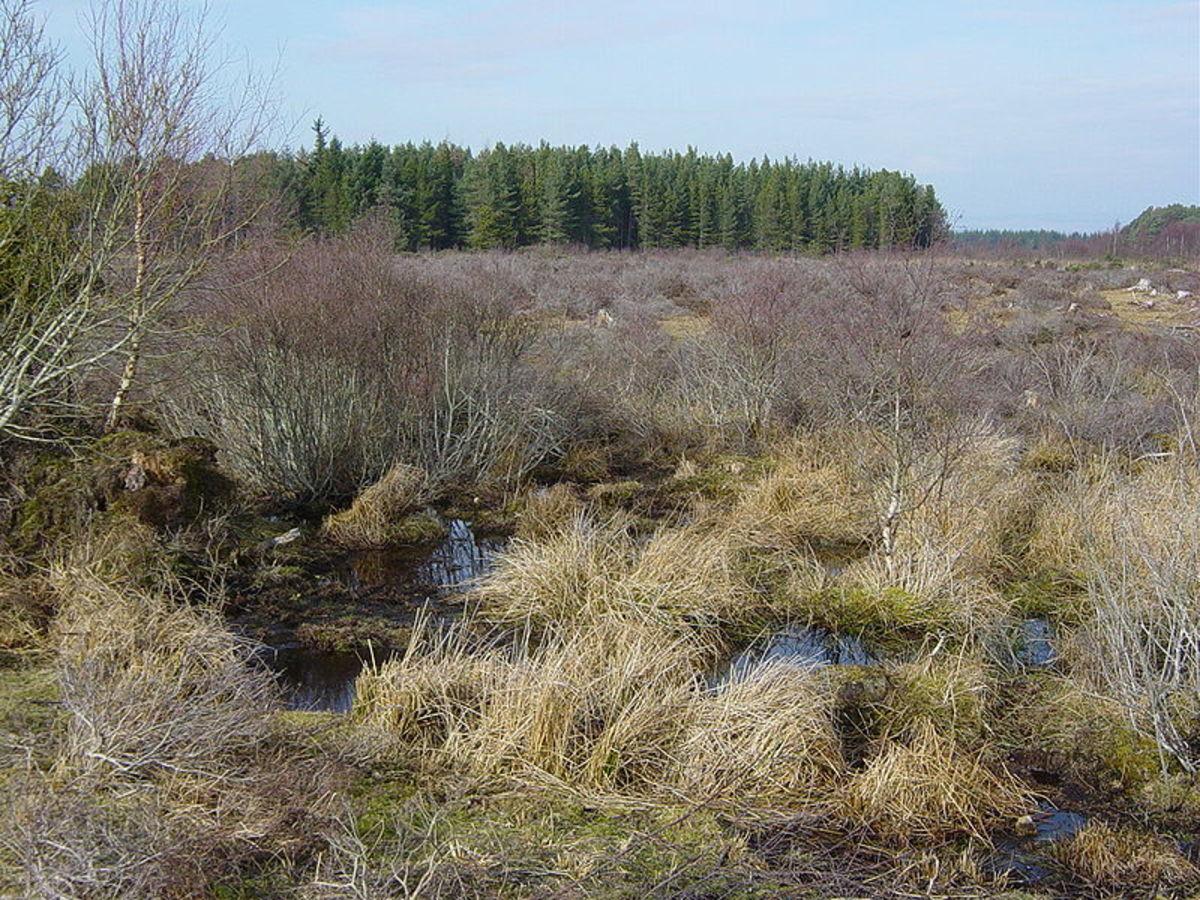 Culloden Moor in Scotland