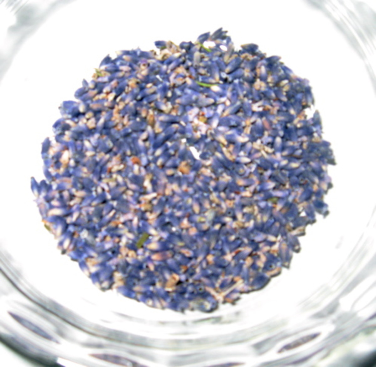 Culinary lavender / Photo by E. A. Wright
