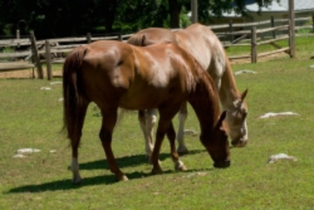 Photo: My Neighbors Horses - Rebel and Bobby