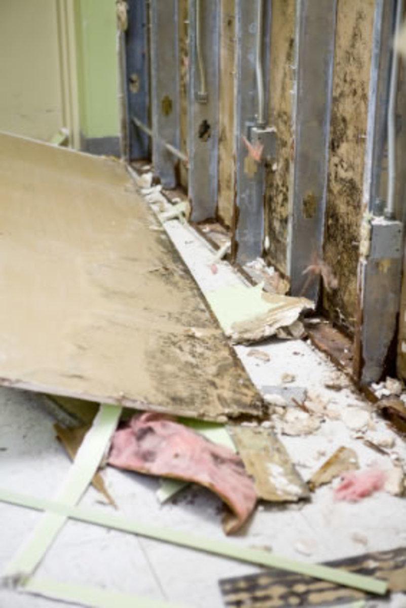 Health Hazards in Mold and Mildew
