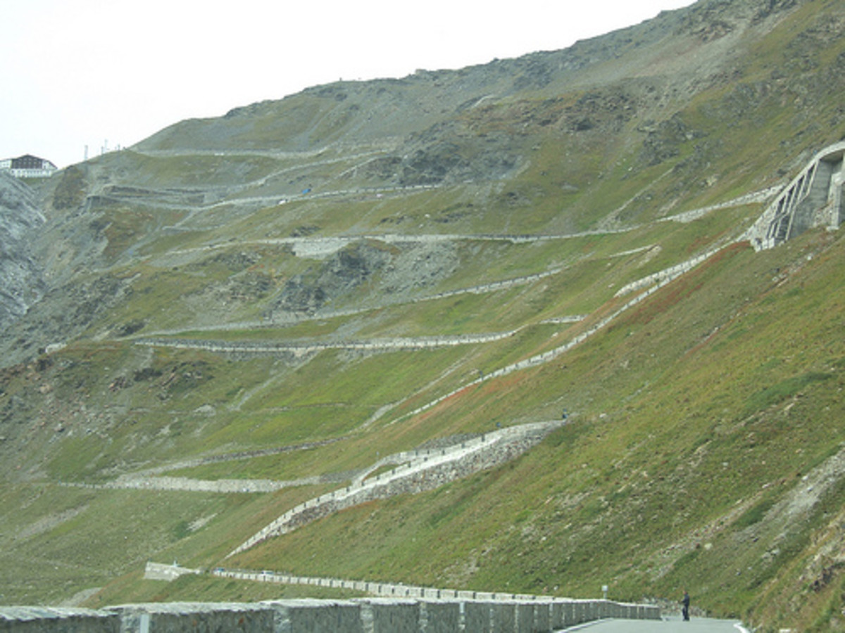 Greenery at The Stelvio Pass