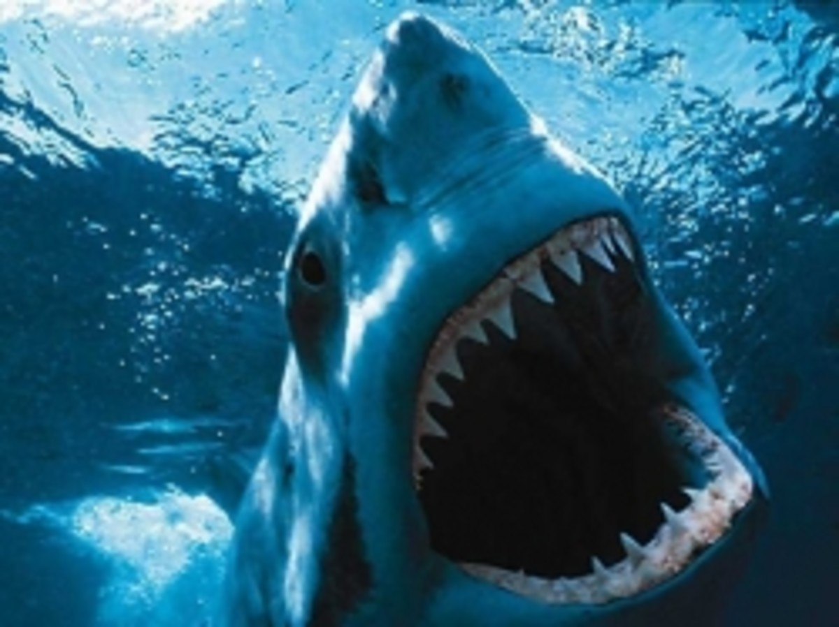 worlds-deadliest-fish-some-of-the-most-dangerous-fish-on-earth