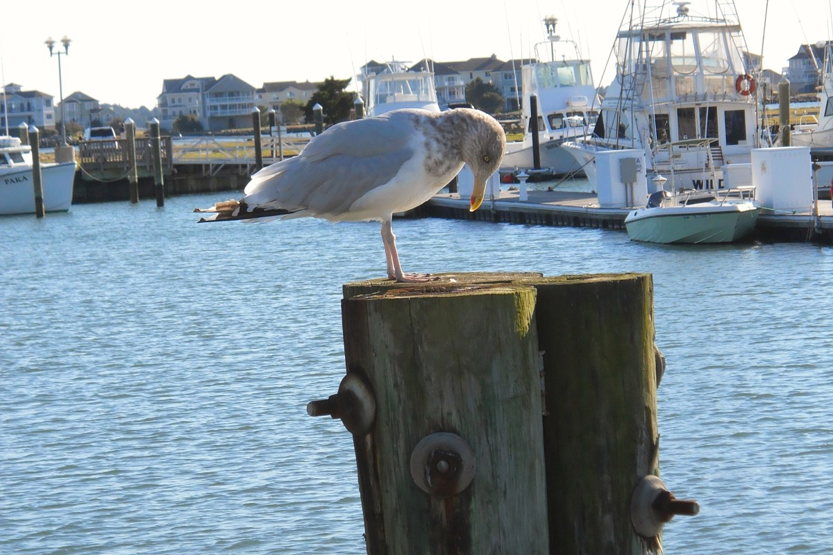 Indian River Marina is a great place to picnic, fish or go boating.