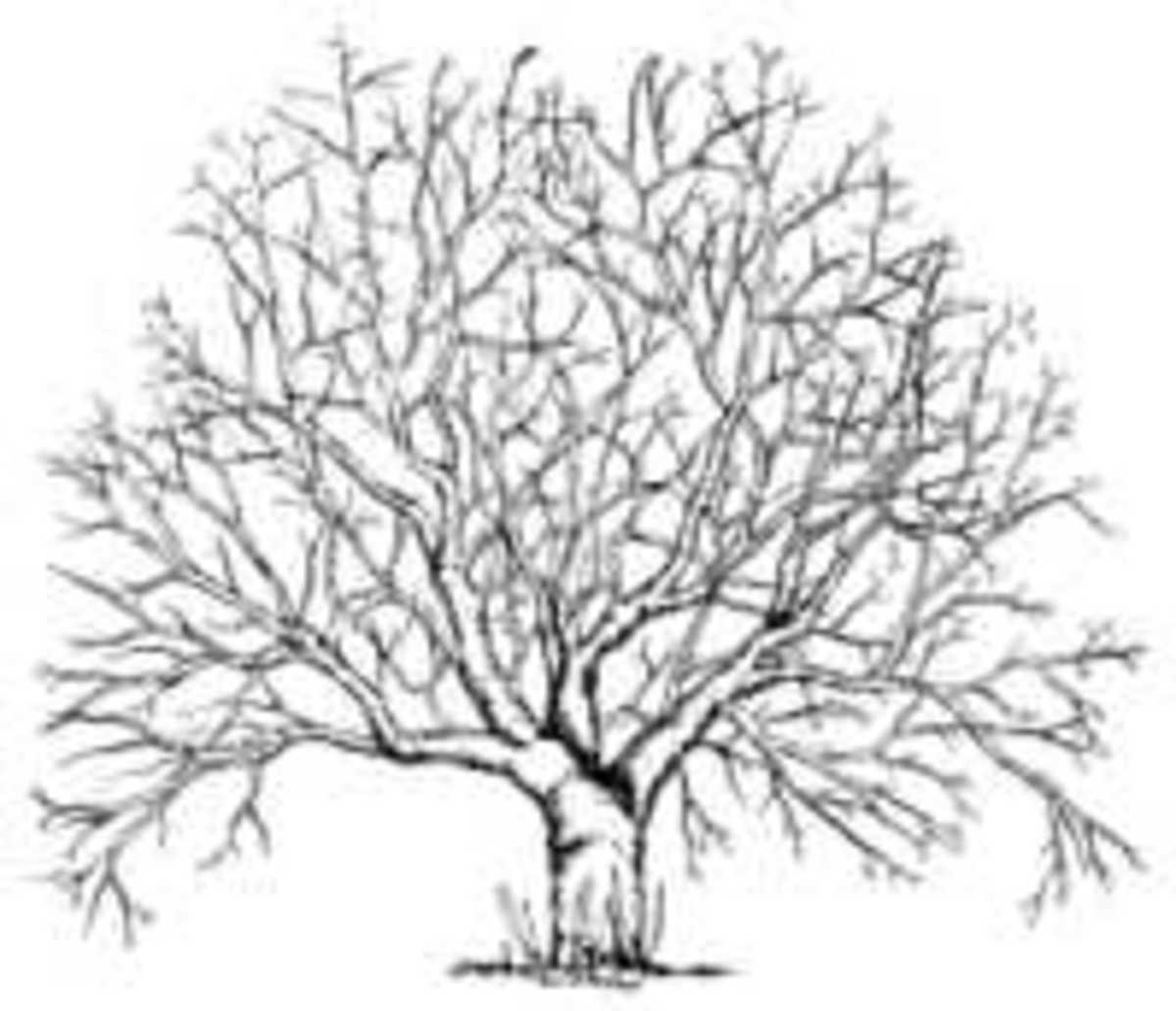 Overgrown Apple Tree