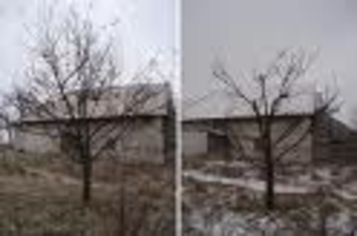 apple tree before and after pruning