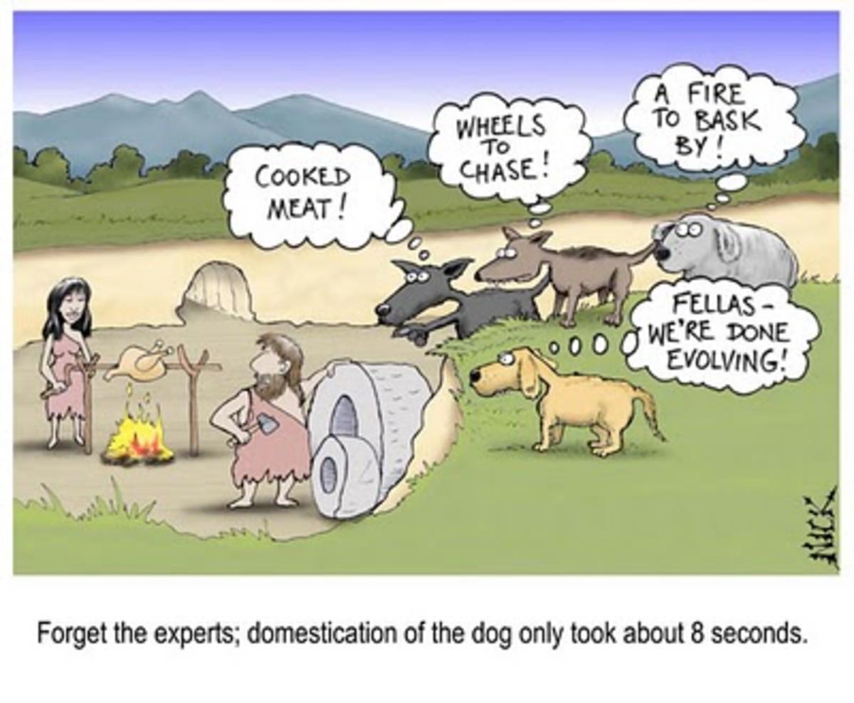 EVOLUTION OF THE DOG