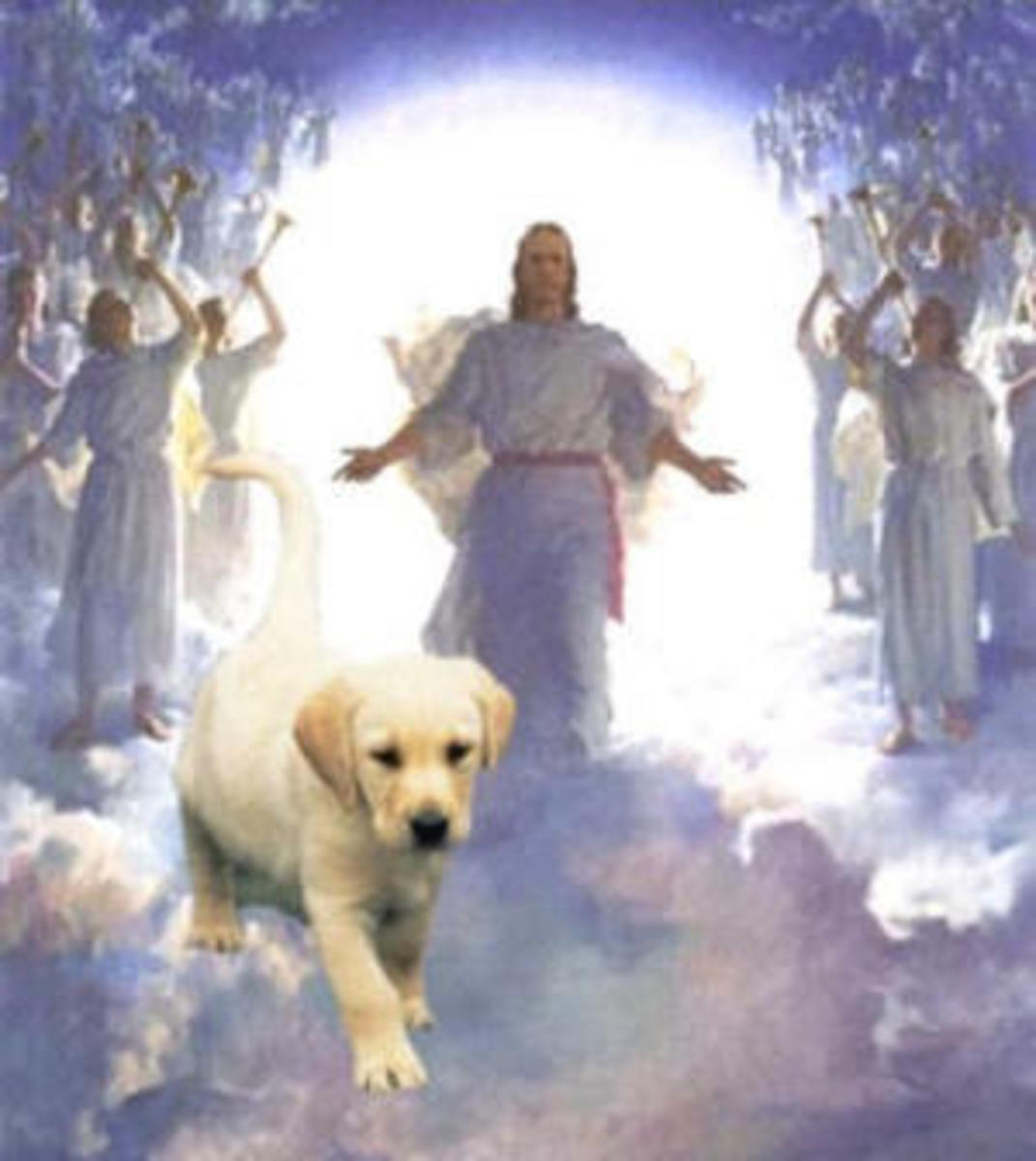Do All Dogs Really Go To Heaven?  Many people who have had NDEs recall seeing animals pass through the light.   They also claim to have seen beloved pets that have passed on.