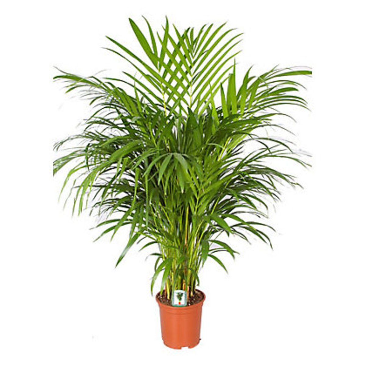 houseplants-that-clean-the-air-you-breathe