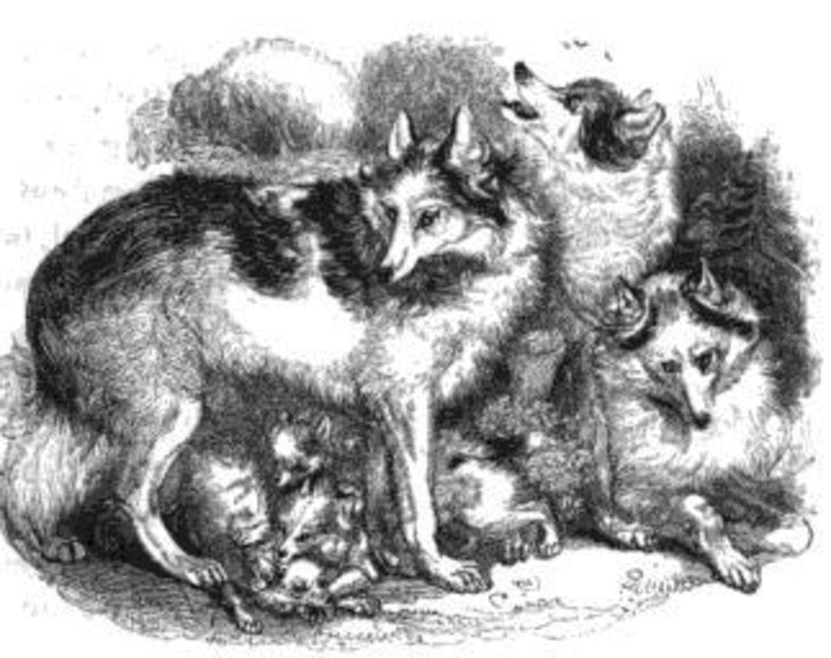 hare-indiand-dog-an-extinct-breed