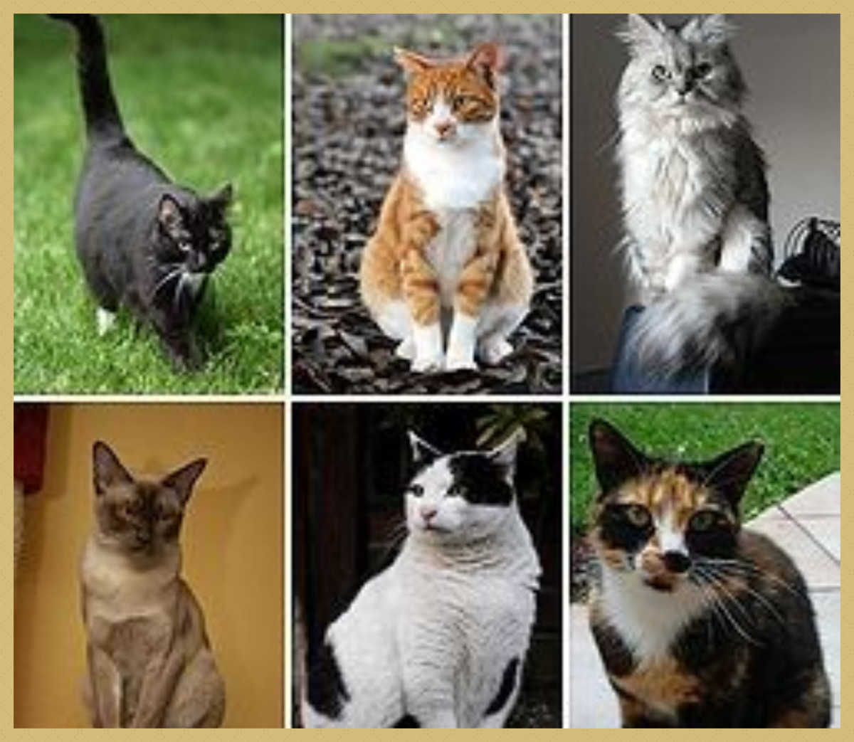 A to Z Guide of Cats