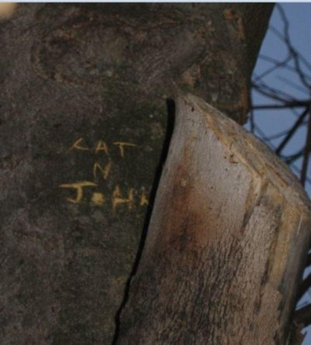 Cat N John
