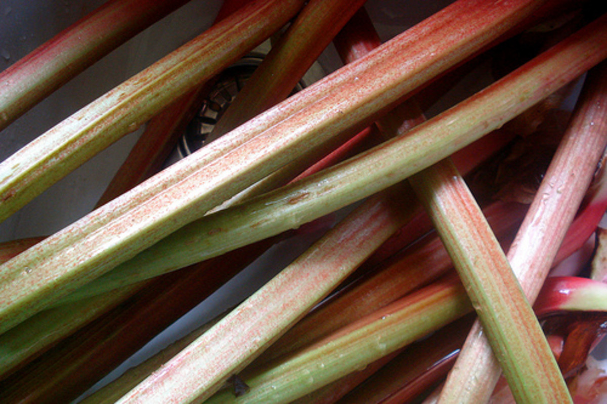 rhubarb-the-harbinger-of-spring-the-perfect-rhubarb-pie